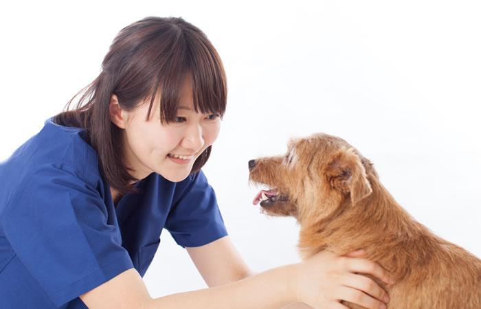 犬のしつけのイメージ画像